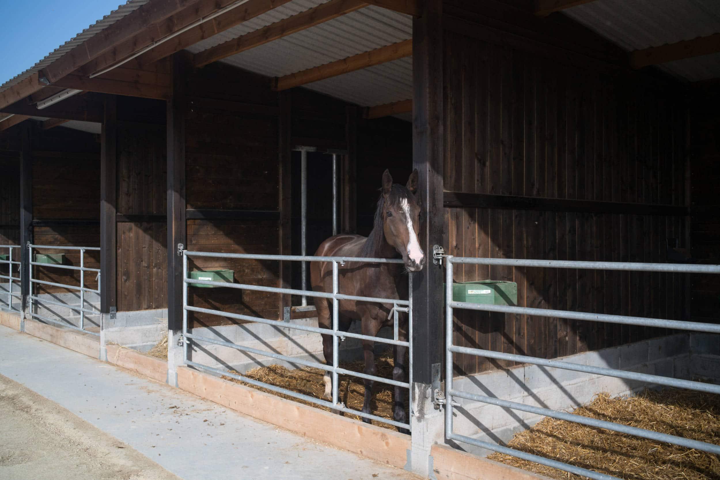Dans l'un des box qui se succèdent, un cheval bai portant une marque blanche des oreilles à la bouche passe la tête par dessus la barrière.