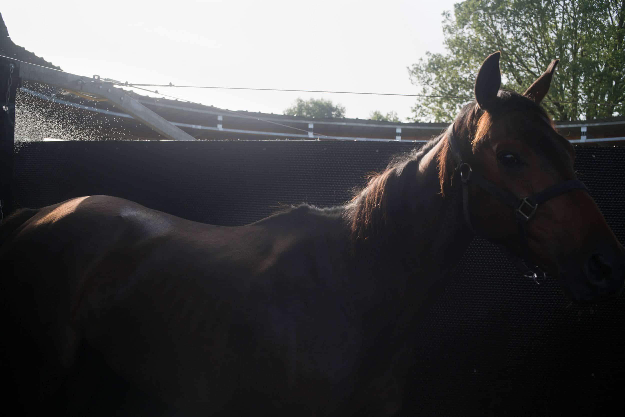 Un cheval se découpe sur un fond noir, en extérieur. On aperçoit des gouttes d'eau en arrière plan.