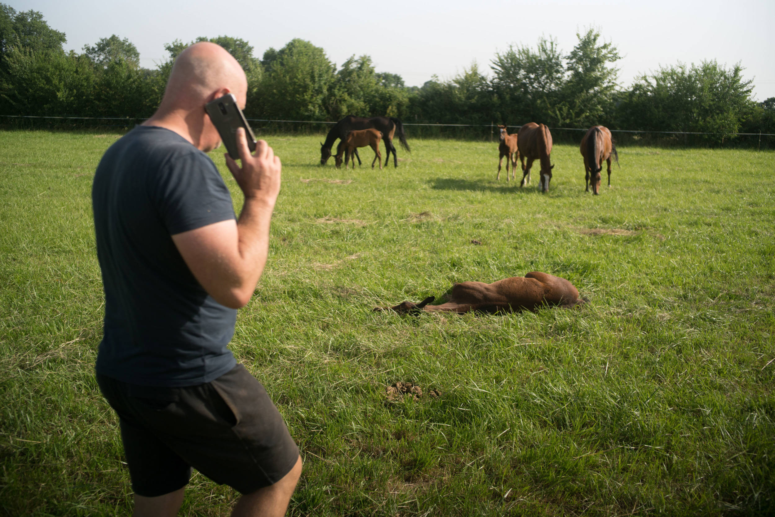 David Giraudeau marche dans un champ, le téléphone porté à son oreille. On aperçoit des chevaux et des poulains dans un pré, et un poulain étendu dans l'herbe devant David.