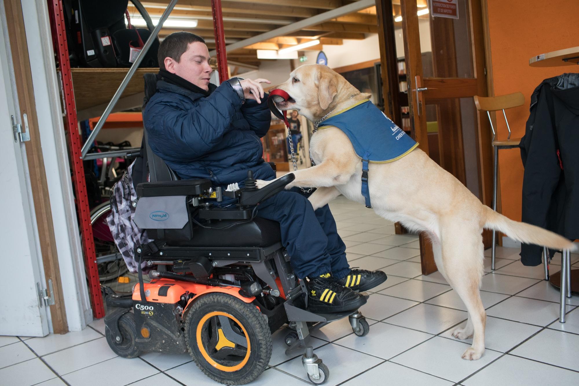Le chien guide, appuyé sur les genoux d'Edouard, lui tend la laisse entre ses crocs