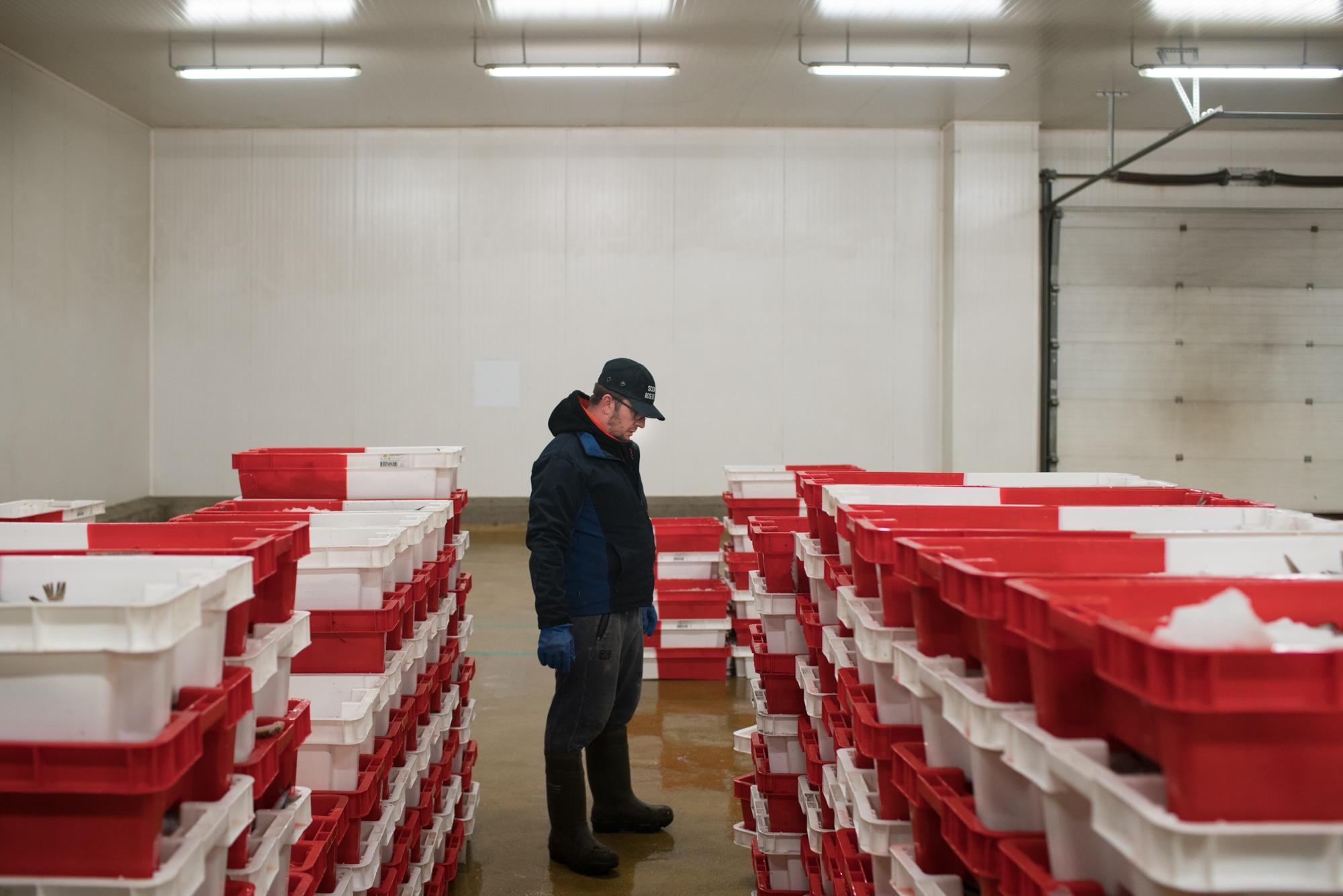 José Leprêtre inspecte les caisses de poissons frais.