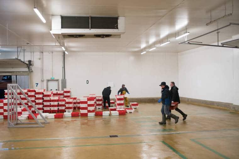 José Leprêtre et son équipe acheminent des caisses de poissons dans le hangar