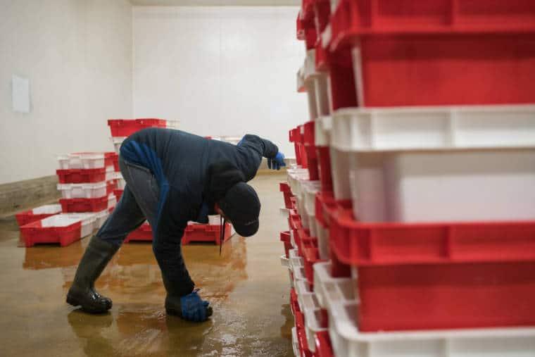 José Leprêtre inspecte des caisses de poissons.