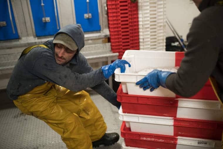 Un pêcheur manipule des caisses de poissons frais.