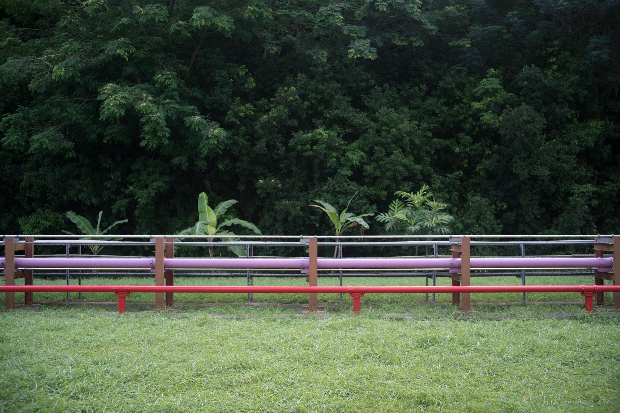 Vue extérieure : des tuyaux courent le long d'une pelouse verte. À l'arrière, une forêt luxuriante.