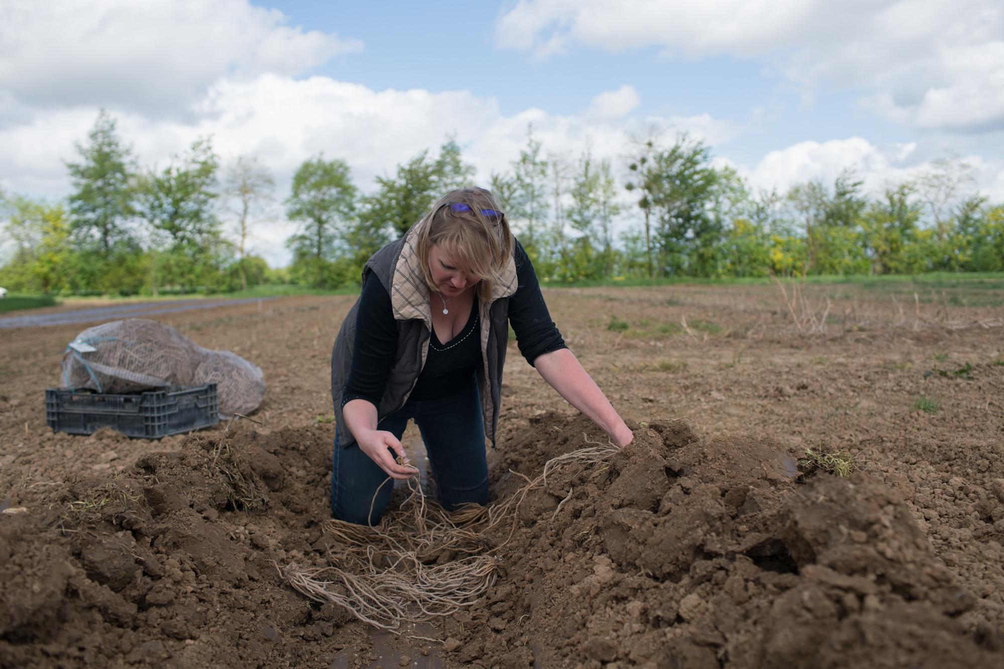 À genoux dans une tranchée, Sophie dispose des racines dans la terre.