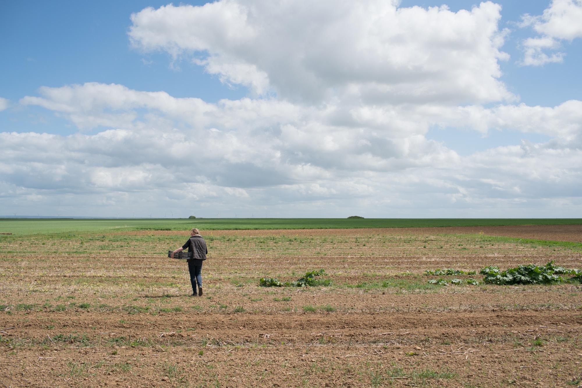 Sophie marche au milieu d'un champ, une cagette vide posée sur sa hanche.