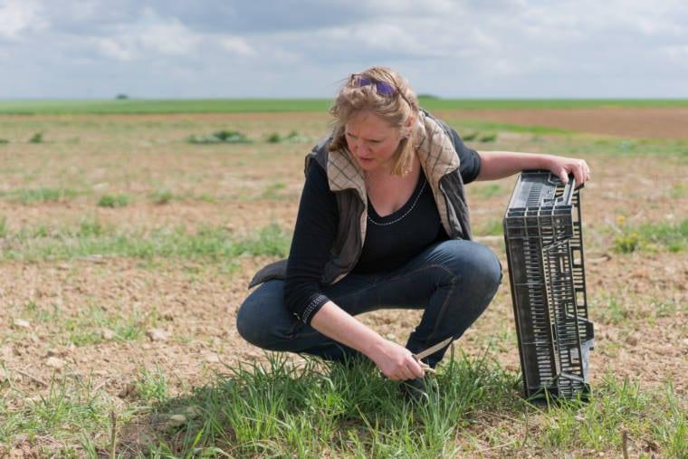 Accroupie dans son champ, appuyée sur une cagette, Sophie observe de jeunes pousses.