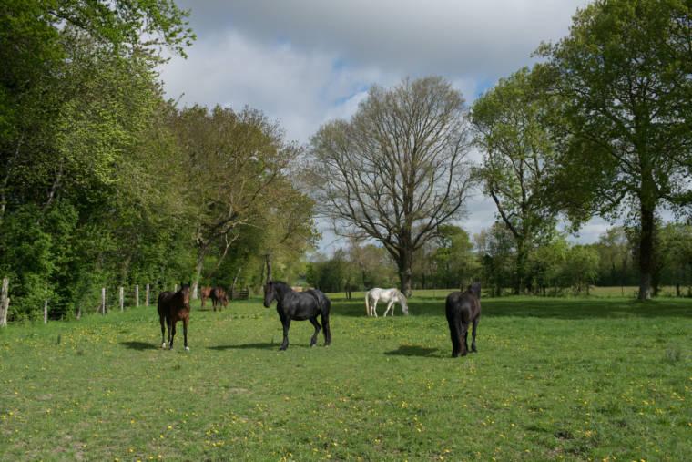 Six chevaux bai, noir et blanc au pré.